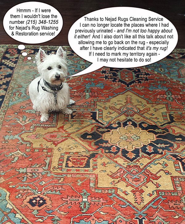 Pet has taken over custody of the family Oriental rug!