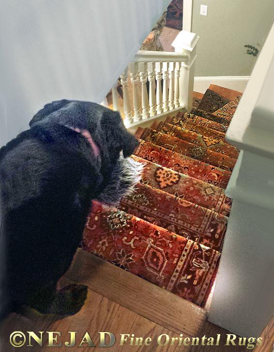 Dog Loves Staircase Runner
